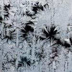 Frostwork — Stock Photo #1627426