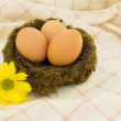 Stock Photo: Eggs in nest