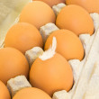 Stock Photo: Eggs in a cardboard