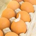 Eggs in a cardboard — Stock Photo