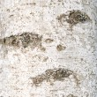Bark of birch - Stock Photo