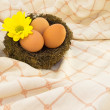 Eggs in the nest — Stock Photo #2418956