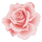 孤立したピンクのバラ — ストックベクタ