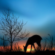 Stock Photo: Silhouette view of deer eating grass