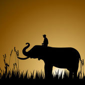 Elephant with human, wildlife — Stock Photo