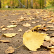 Footpath filled up by yellow leaves — Stock Photo