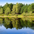 Bog with reflection on forest — Stock Photo #1292121