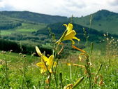 Single fyellow lowers on mountains — Stock Photo