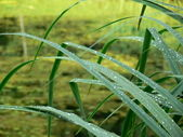 Bog and cane leaves — Stock Photo