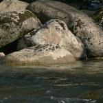 Big stones in river — Stock Photo