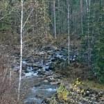 Flow in taiga. Autumn. — Stock Photo