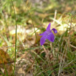 Small flower in taiga — Stock Photo