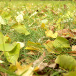 Stock Photo: Green and yellow leaves on grass