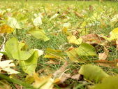 Green and yellow leaves on a grass — Stock Photo