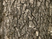 Background from wood bark. Horizontal — Stock Photo