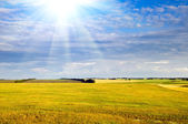Yellow field, sky with sun beam — Stock Photo