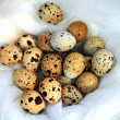 Quail eggs — Stock Photo #1295106