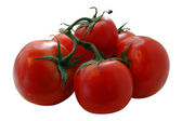Olgun domates — Stok fotoğraf