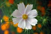 Flor blanca — Foto de Stock