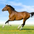Stock Photo: Bay horse running in field