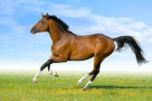 Bay horse running in field — Stockfoto