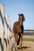 Horse galloping outside in paddock — Stock Photo