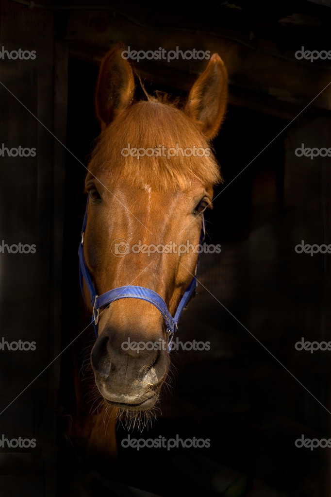 Portrait of horse in black indoor — Stock Photo #1522618