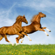 Stock Photo: Chestnut bavarihorses in field