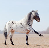 Horse with raised leg in field — Stock Photo