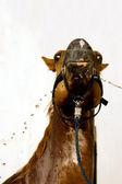 Washing of chestnut horse — Stock Photo
