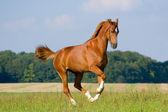 Bavorské ryzák v oboru — Stock fotografie