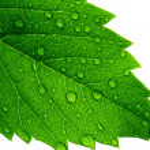 Green leaf — Stock Photo #1286062