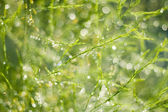 Rainy green — Stock Photo