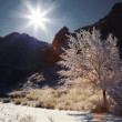 Stock Photo: Snowy Tree on sunny day