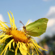 Stock Photo: The butterfly on a yellow flower