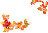 Flowers isolated on white — Fotografia Stock