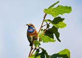 Beautiful bird on a branch — Stock Photo