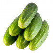 Fresh cucumbers — Stock Photo