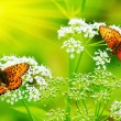 Butterflies on flowers — Stock Photo #2403046