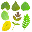 Set of various leaves of trees and plant — Stock Photo