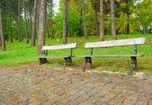 Twee gratis bankjes in regenachtige herfst park — Stockfoto