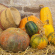 Autumn composition from various pumpkins — Stock Photo