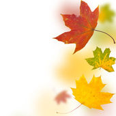 Autumn background from leaves of differe — Stock Photo