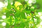 Green spring branch — Stock Photo