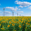 Foto de Stock  : Sunflowers and wind power station