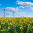 Stock Photo: Sunflowers and wind power station