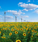 Sunflowers and wind power station — Stock Photo