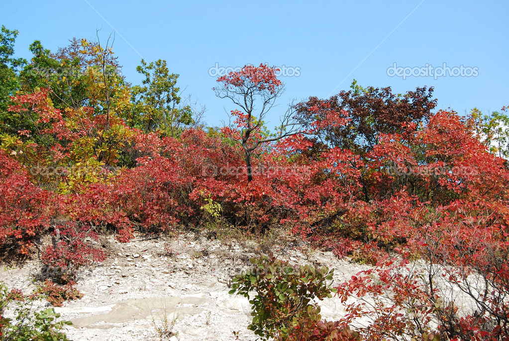 Beautiful autumn landscape with bright plants — Stock Photo #1946633