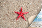 Starfish on sea sand — Stock Photo