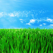 Meadow with a green grass — Stock Photo